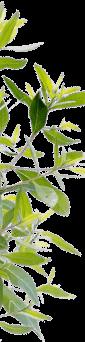Decoration plante milieu gauche